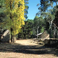 wirrabara forest camping